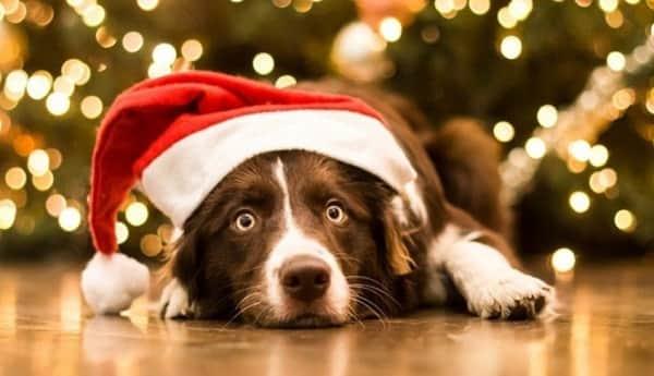 Новый год 2018 собаки