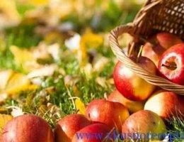 яблочный спас 2016 какого числа